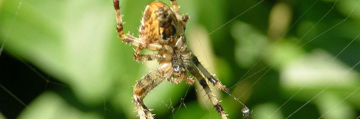 Edderkop som symbol på fobier