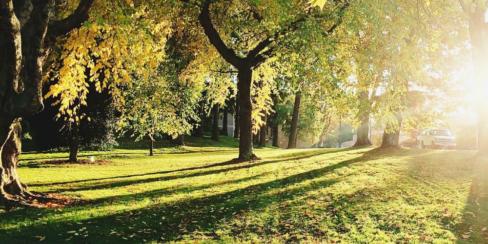 Oplev Hillerøds smukke natur , når du besøger Slotsarkaderne